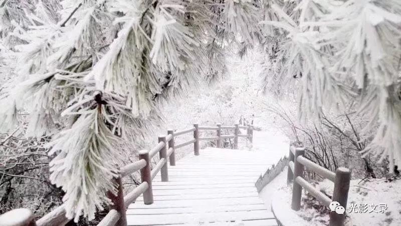 赏雪的人,有的清清喉咙放声歌唱;有的张开双臂大声呼唤;有的还童性大发,坐着雪地上一溜就是几米远,打着雪仗、堆雪人,滚雪球。