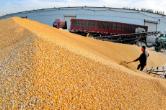 从粮食收购形势看粮食产业供给侧结构性改革