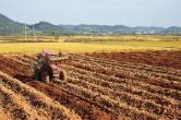 """""""最强""""土壤保护法将实施"""