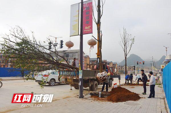 江华:瑶山移民新镇植树忙