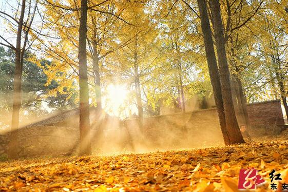 Golden season in Dong