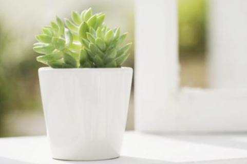 天寒地冻,怎样的植物自带抗寒体质?