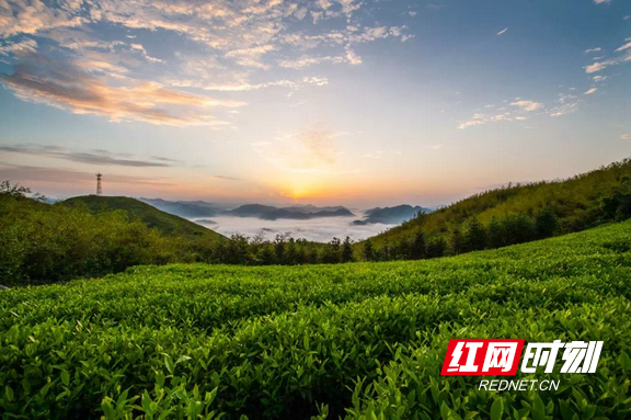 """【民营企业有力量】李亮:在""""大美云台山""""写一曲茶旅融合之歌"""