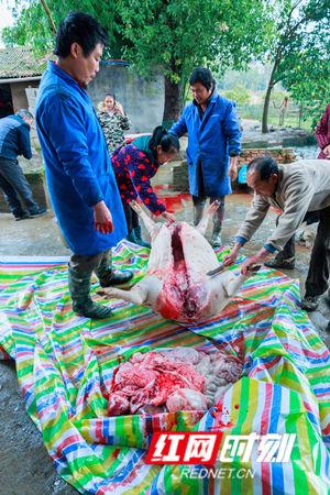 开镗剖肚,掏尽内脏的年猪肉。