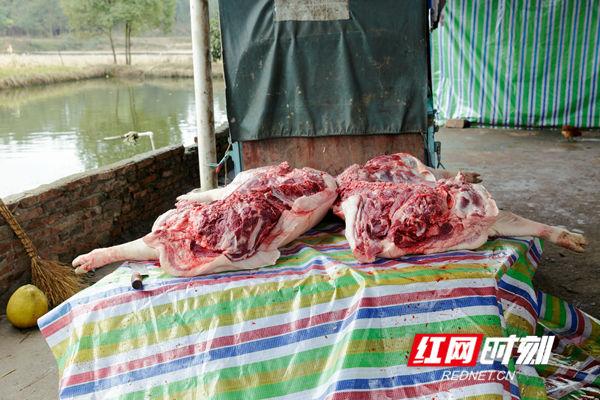 净身处理好的年猪肉,等待主人分割出售。这种土猪肉红光发亮,肥肉比较厚,特别香甜,肉质酥软,特别松口,肥而不腻,精而不柴,可谓色、香、味俱全。