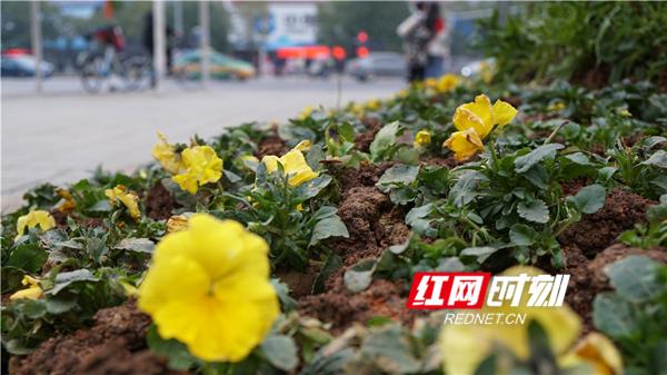 永州:喜气洋洋迎新年