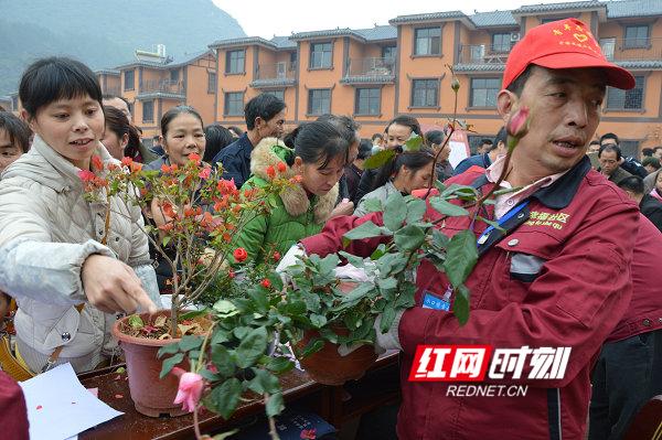 江华:万盆鲜花送移民瑶胞