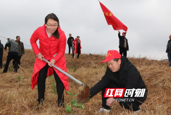 湖南宁远:3000余名干部群众义务植树5万余株