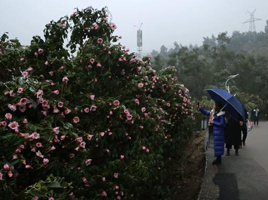 """怀化中坡国家森林公园""""冰封""""美景引人入胜"""