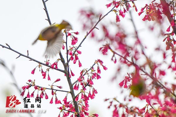 道县:鸟语花香春意浓
