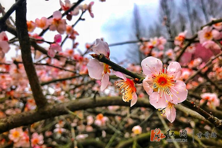 春暖花开 繁花争艳