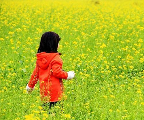 长沙市民注意!踏青赏花谨防花粉过敏和动物咬伤