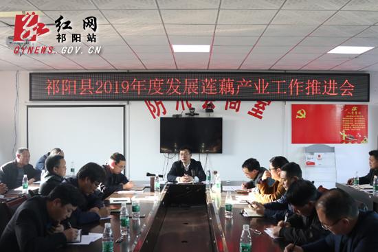 """祁阳:将莲藕产业作为""""百村振兴""""的重要抓手"""