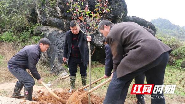 新田:村民众筹植树 共建美丽乡村