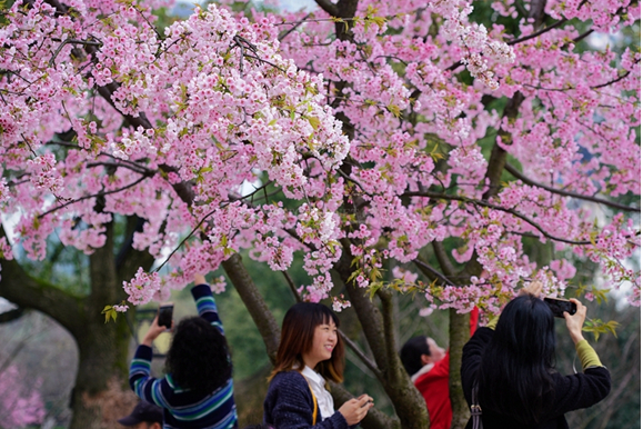 Flowers are blooming in Xiaoyuan Park, Changsha