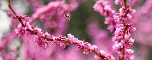 春光灿烂赏花来
