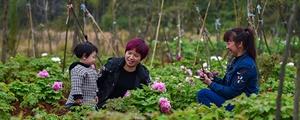 桂阳石漠山成赏花园