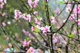 官宣视频丨春看岳麓湖南省委书记省长这些话很暖心!