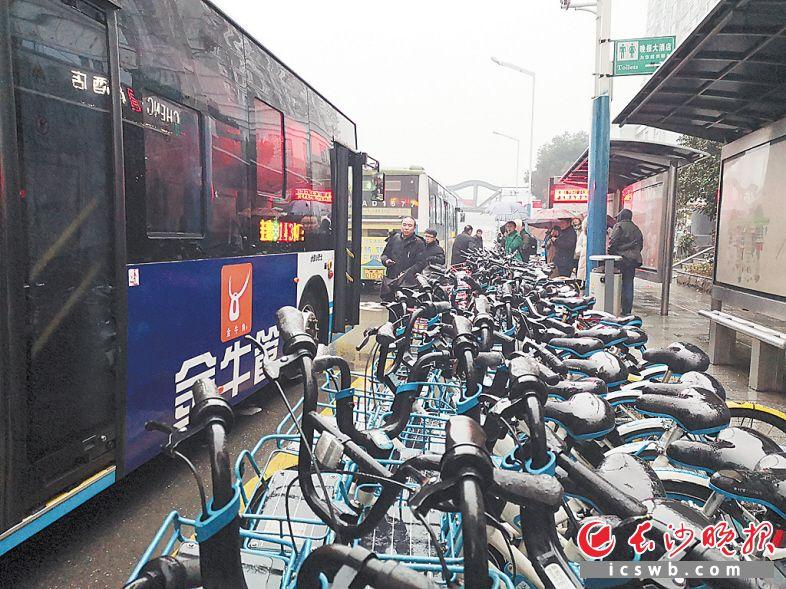共享单车挤满公交站,乘客上下公交车不方便。      长沙晚报全媒体记者 谢春年 摄