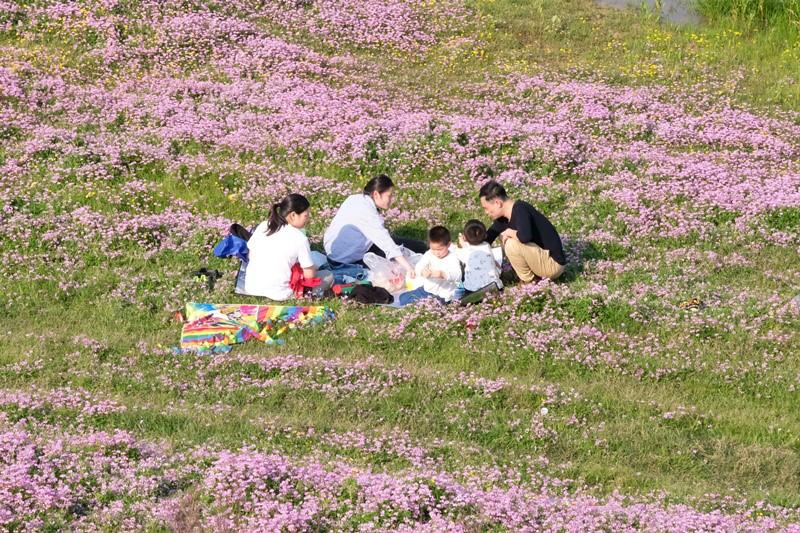 不负好春光,一天五千游客打卡汨罗而且江国家湿�地公园