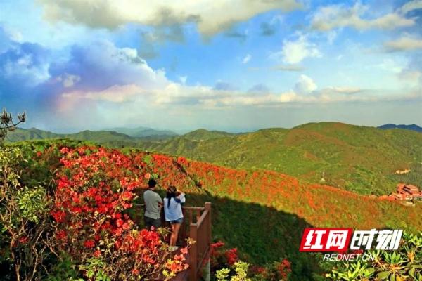 双牌:28种杜鹃花次第开 阳明山迎来一年最美季节