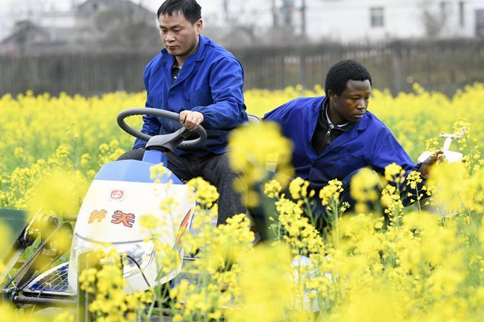 African youth in Hunan: I am learning agricultural technologies in China