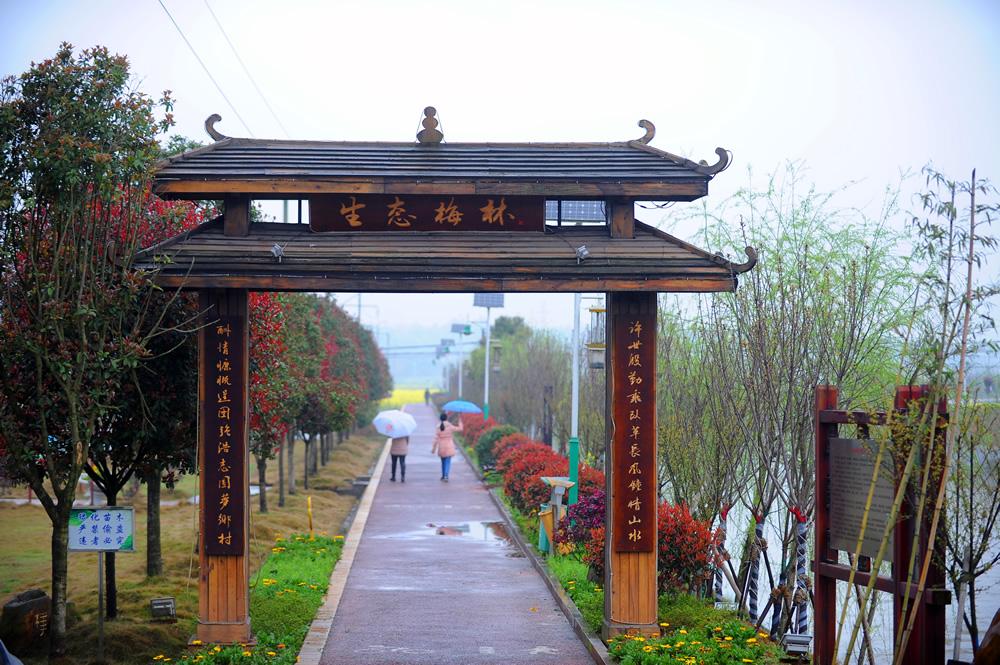 多彩梅林(摄影:方阳)
