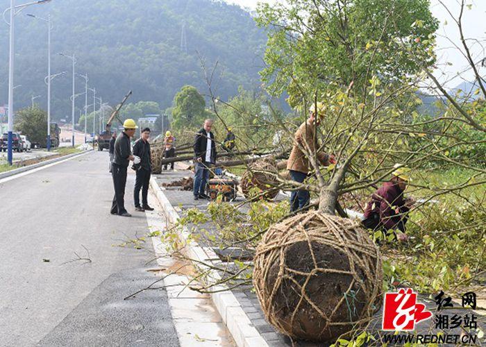 大将南路工人们正在刨坑栽树_副本700-500.jpg