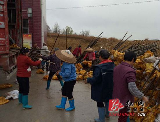 东安:产业扶贫增富路