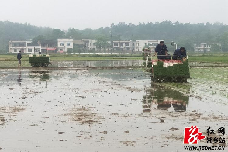 潭市镇:推广新型机插秧时时彩技术   推动农业高质量发展