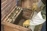 蜜蜂、稻田蛙圆梦脱贫户...毛田红旗村开启扶贫新模式