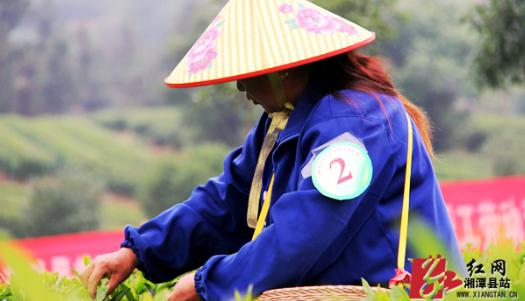 春夏之交,来湘潭乌石景区当茶农品佳茗吧!