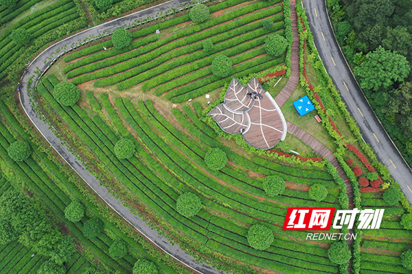 乡村公路穿行茶山间(图片来源-湖南日报).jpg