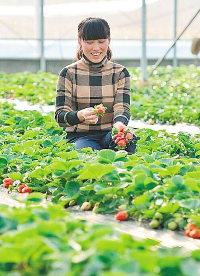 湖南:初夏时节大批应季水果成熟