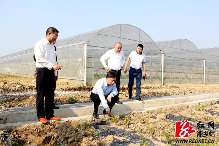 李江南到湘乡调研东郊现代农业示范园建设