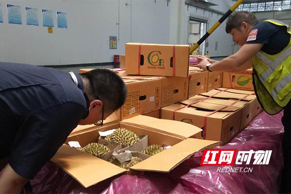 """飞机直达""""不绕路"""" 泰国首批直接进口水果登陆湖南"""