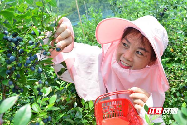 感受田园采摘的乐趣,还可以品尝香甜可口的水果。