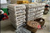 梅桥镇:发放鸡苗促增收 助力扶贫暖民心