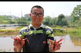 助力乡村振兴!小龙虾市场火爆催生养殖热