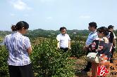 金薮乡:湘潭市人大代表第四代表小组为金薮油茶产业发展献策