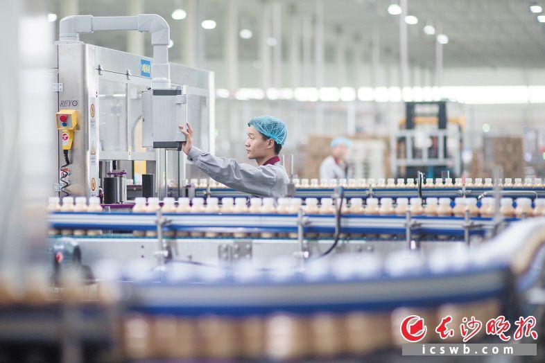 在位于湖南宁乡经开区的湖南好益多乳业有限公司生产车间,一条生产线每小时可生产4.8万瓶乳饮料。长沙晚报全媒体记者 黄启晴 摄
