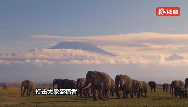 湖南卫视丨《我们的非洲朋友》走近肯尼亚