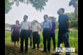 市领导督导澧县污染防治工作