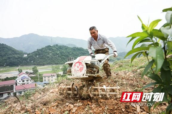 安化南金村:农旅融合打造美丽新乡村