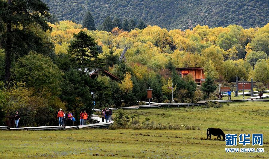 游人在云南香格里拉普达措国家公园里游览(2015年10月13日摄)。目前,我国有9个国家公园体制试点正在进行,包括三江源、大熊猫、神农架、北京长城及香格里拉普达措等。普达措国家公园试点区位于云南省迪庆藏族自治州香格里拉市境内,试点区域总面积为602.1平方公里。该公园平均海拔接近3500米,拥有地质地貌、湖泊湿地、森林草甸、河谷溪流、珍稀动植物等,原始生态环境保存完好。试点区分为严格保护区、生态保育区、游憩展示区和传统利用区,各区分界线尽可能采用山脊、河流、沟谷等自然界线。目前云南省及迪庆藏族自治州有关部门正按照试点方案要求,积极推进试点各项工作,加强普达措国家公园试点区自然生态系统的保护。新华社记者 蔺以光摄
