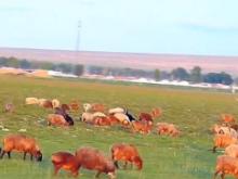新疆是个好地方:从白天到黑夜  新疆歌舞不停歇!