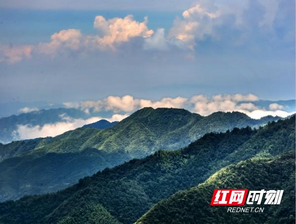 大托山寨的石瀑,气势磅礴的登山攀崖的最佳之地;崇木凼村的古树林海,是都市人与森林对话,听雾海松涛的绝妙之处。