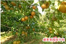 8月2日湘乡手机报