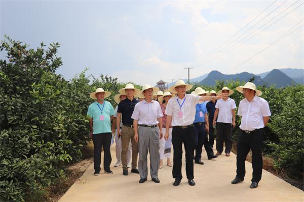 国家农业部专家学者来回龙圩管理区调研柑橘黄龙病防治工作