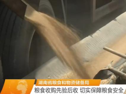 湖南省粮食和物资储备局 粮食收购先验后收 切实保障粮食安全